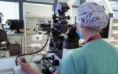 Die Methode MOON bestimmt die Zeit der wahrscheinlichsten Embryobildung